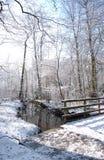 冬天森林地 库存照片