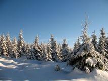 冬天森林地 免版税库存图片