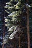冬天森林心情/细节 库存图片