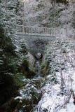 冬天森林心情/细节 免版税库存照片