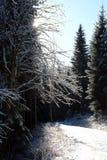 冬天森林心情/细节 免版税库存图片