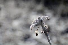 冬天森林心情/细节 免版税图库摄影
