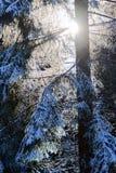 冬天森林心情/细节 图库摄影