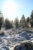 冬天森林心情/细节 库存照片