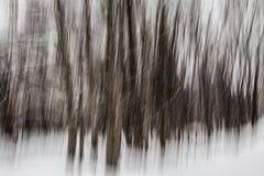 冬天森林摘要 库存照片