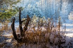 冬天森林日落点燃蓝色黄色 免版税库存图片