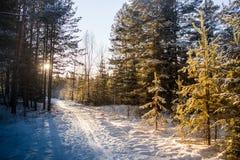 冬天森林日落点燃蓝色黄色 免版税库存照片