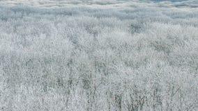 冬天森林有鸟` s眼睛视图 影视素材