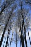 冬天森林树梢 免版税库存图片
