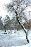 冬天森林湖 库存图片