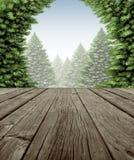 冬天森林甲板框架 免版税图库摄影