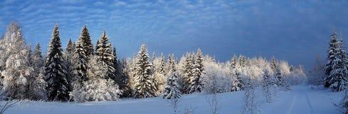 冬天森林的全景 免版税库存图片