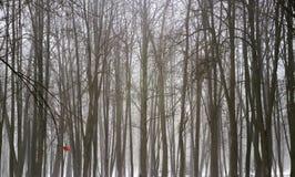 冬天森林的样式 免版税库存照片