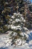 冬天森林的照片 库存照片