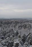 冬天森林的看法 库存照片