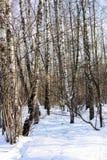 冬天森林看法在晴天 图库摄影