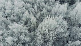 冬天森林积雪的树的鸟瞰图,冬天美好的自然 影视素材