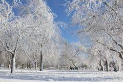 冬天森林童话 免版税库存照片