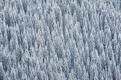 冬天森林背景 免版税图库摄影
