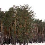 冬天森林自然在冬天 库存照片