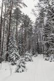 冬天森林自然多雪的风景室外背景 库存照片
