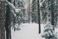 冬天森林自然多雪的风景室外背景 库存图片