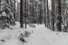 冬天森林自然多雪的风景室外背景 免版税库存图片