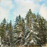 冬天森林葡萄酒风格化照片  免版税库存照片