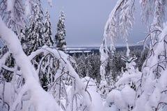 冬天森林通过在滑雪场武奥卡蒂的积雪的分支 免版税库存照片