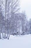 冬天森林雪 库存照片