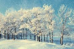冬天森林风景与多雪的冬天树和下跌的雪冬天晚上多雪的冬天树丛 免版税库存照片