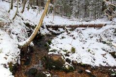 冬天森林风景在俄罗斯 库存照片
