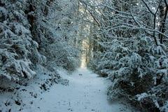 冬天森林风景在卡塔龙尼亚 免版税图库摄影