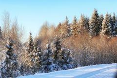 冬天森林风景阳光雪 免版税库存图片