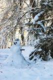 冬天森林风景阳光雪 库存照片