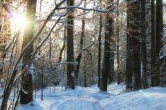 冬天森林风景阳光雪 免版税库存照片