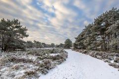 冬天森林风景阿森德伦特省 免版税图库摄影