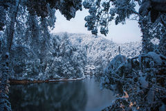 冬天森林风景 免版税图库摄影