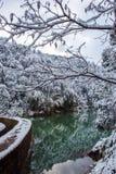 冬天森林风景 免版税库存照片