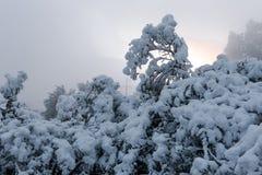 冬天森林风景 库存照片