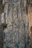 冬天森林,俄罗斯, Karachay切尔克斯共和国,结构,石块,岩石,绿叶,花梢样式,部分 库存图片