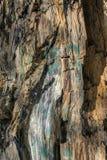 冬天森林,俄罗斯, Karachay切尔克斯共和国,结构,石块,岩石,绿叶,花梢样式 免版税库存图片