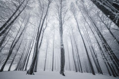 冬天森林,冬天自然 免版税库存图片