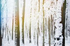 冬天森林,在雪下的树 图库摄影