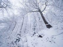 冬天森林,当下雪时 斯诺伊树在黑暗和有薄雾的冬天公园 平衡走 免版税库存照片