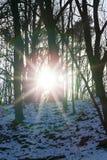冬天森林,特写镜头 库存照片