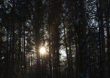 冬天森林,特写镜头 图库摄影
