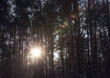 冬天森林,特写镜头 免版税库存照片