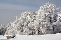 冬天森林,用雪包括的结构树 免版税库存图片