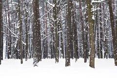 冬天森林,风景 库存照片